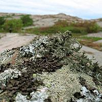 sweden-stone-small