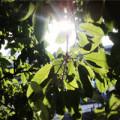 chongqing-sunshine