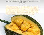 jackfruit-art-conversation