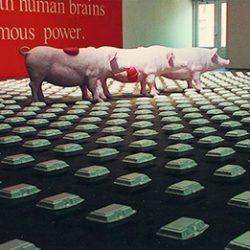 徐坦,《Dream Pigs》